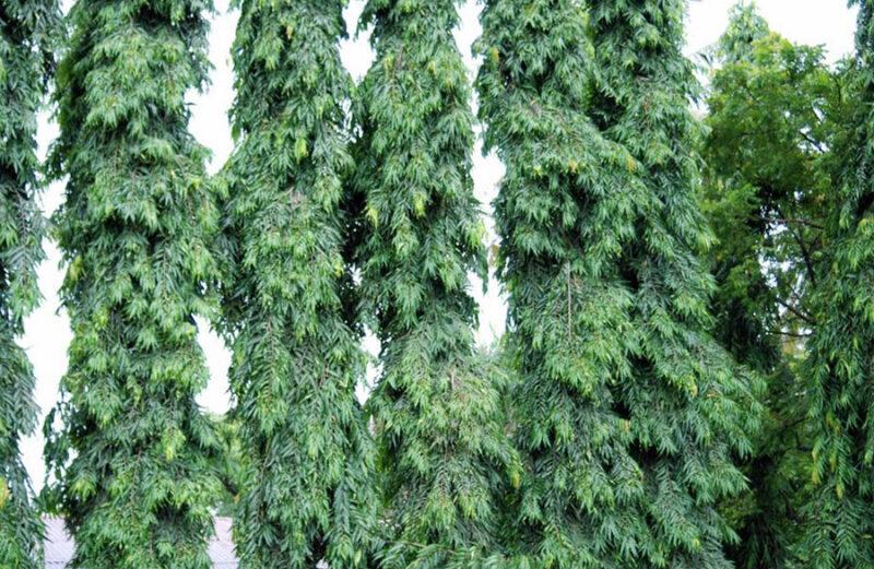 ภาพ : https://th.wikipedia.org/อโศกอินเดีย